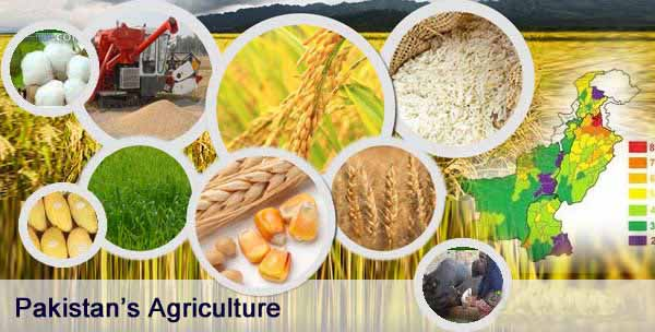 Pakistan an Agricultural Country with Facts