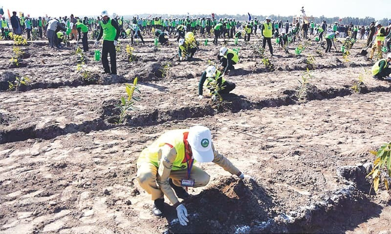 KP mass plantation program